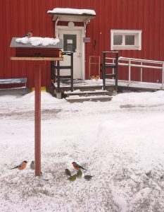 Vinter entré fågelstuga
